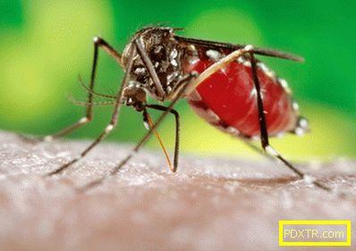 Ухапване от комар на дете - опасно ли е? какво да направите,