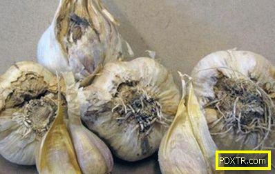Култивиране на чесън: необходимите условия и тънкостите на