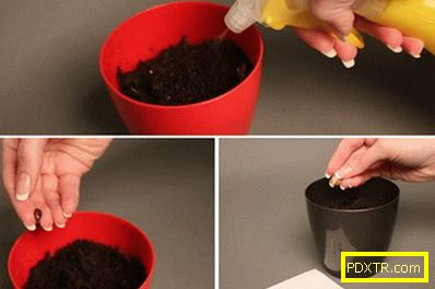Отглеждането на пъпеш е по-лесно, отколкото изглежда! как да