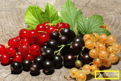 Отглеждане на френско грозде - искате голяма реколта от