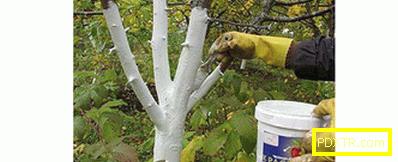Как правилно да отрежете ябълката през пролетта (снимка).