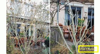 Хобикс градина: правилно кацане и компетентна грижа, снимка.