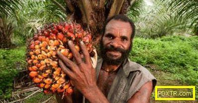 Какво е палмово масло: ползите от продукта и