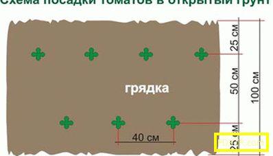 Как да засадите домати за открито място: най-добрите