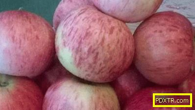 Най-подходящите сортове ябълкови дървета за района на