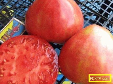 Избор на най-добрите почвени сортове на подмамливите домати
