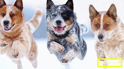 Топ 10 най-интелигентни кучета. кучета от какви породи се