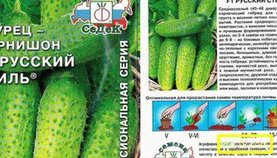 Топ-14 от най-добрите реколта краставици за открита земя: