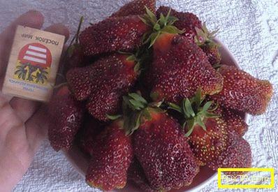 Растете ягоди във всеки ъгъл на страната: най-добрите