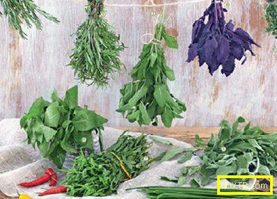 Как да отслабнете с помощта на билки? билки за отслабване