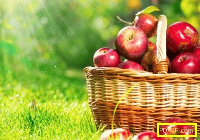 Ден на разтоварване на ябълки